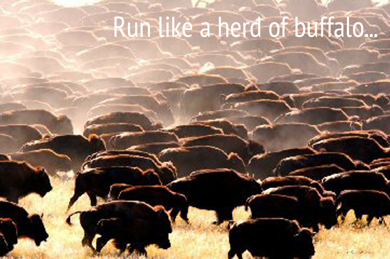 Run like a herd of buffalo