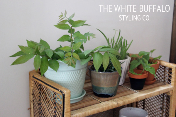 THE-WHITE-BUFFALO-PLANT-STAND