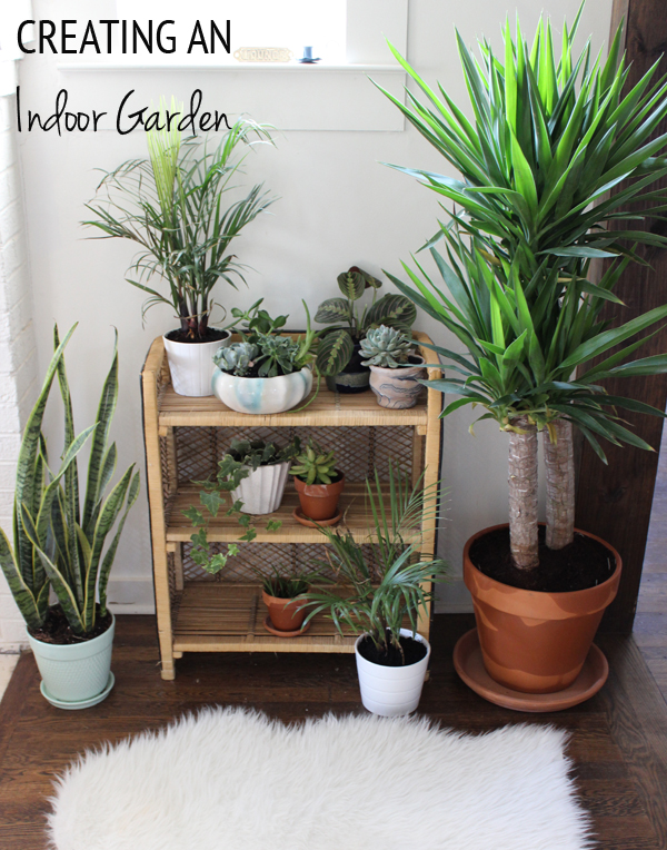 creating-an-indoor-garden