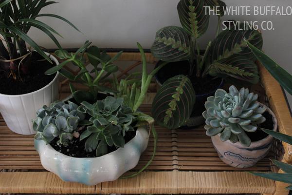 indoor-garden-how-to